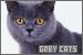 Cats: Grey