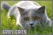 Cats: Grey: