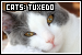 Cats: Tuxedo: