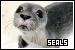 Seals: